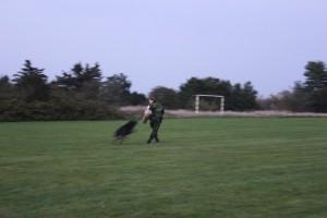 Hund i aktion